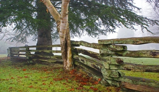 Lidové zvyky kolem stromu