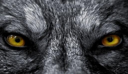 Vlkodlaci v legendách