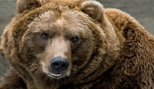 Duch medvěda - znamení hvězdy