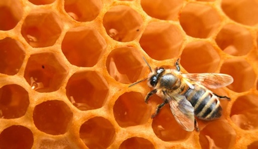 Med - léčivé zlato včel