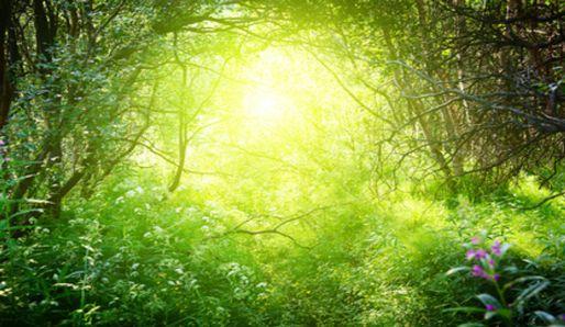 Stromy a příroda. PannaCz.com