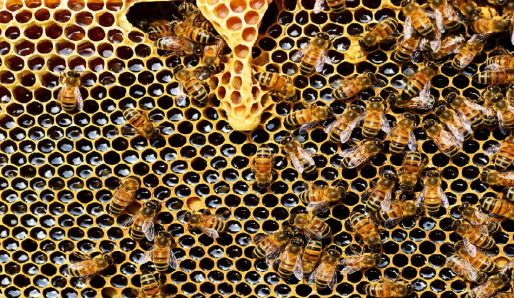 Poklad včel - propolis